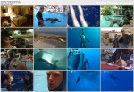 Nurkowanie na bezdechu / Ultimate Freedive (2006) PL.TVRip.XviD / Lektor PL